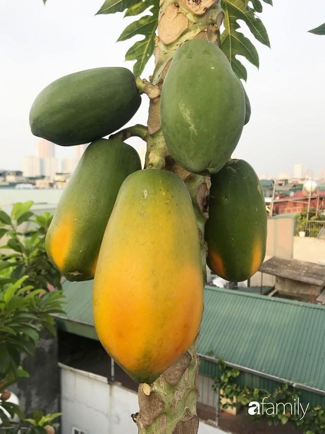 Kinh nghiệm trồng rau quả tốt tươi, bội thu trên sân thượng của mẹ đảm ở Hà Nội - Ảnh 8.