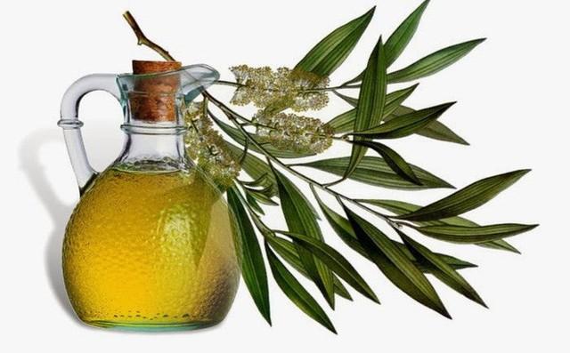 Ngạc nhiên với các loại tinh dầu ai cũng biết nhưng lại không biết cách dùng để trị cảm, ho thật tốt - Ảnh 1.