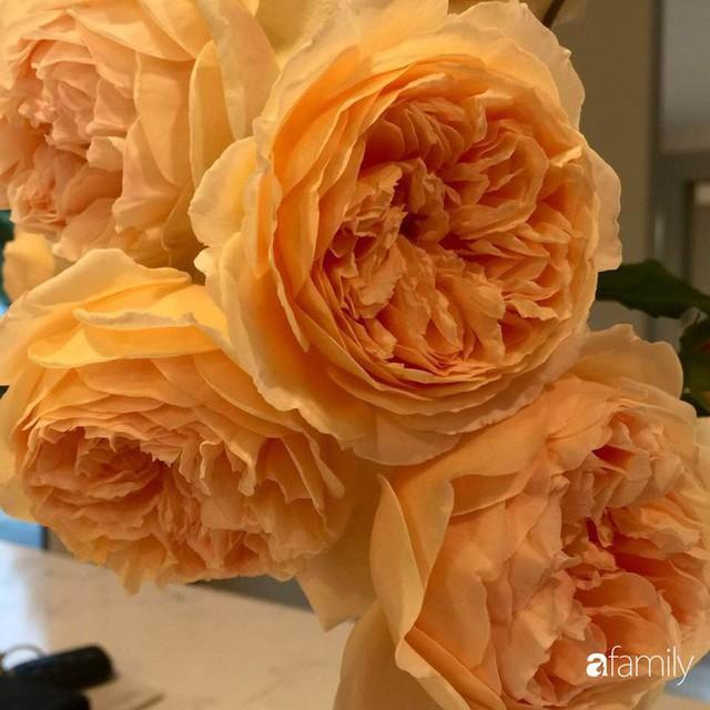 Mẹ Việt dồn hết tâm huyết để biến góc nhỏ trong vườn trở thành khu vườn hồng đẹp ngọt ngào - Ảnh 11.