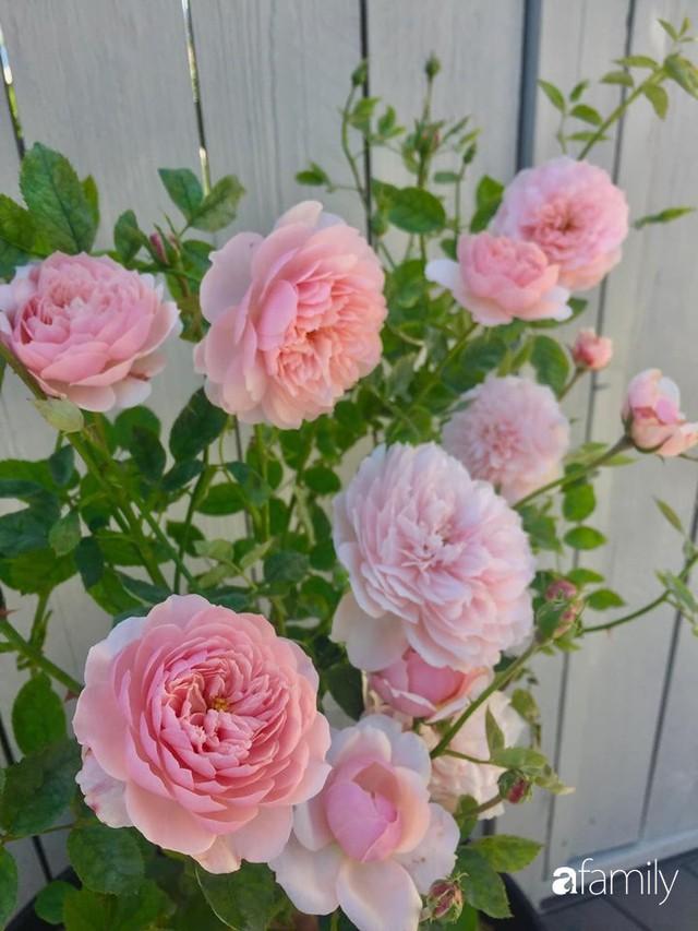 Mẹ Việt dồn hết tâm huyết để biến góc nhỏ trong vườn trở thành khu vườn hồng đẹp ngọt ngào - Ảnh 15.