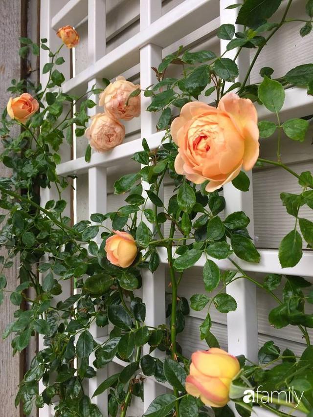 Mẹ Việt dồn hết tâm huyết để biến góc nhỏ trong vườn trở thành khu vườn hồng đẹp ngọt ngào - Ảnh 28.