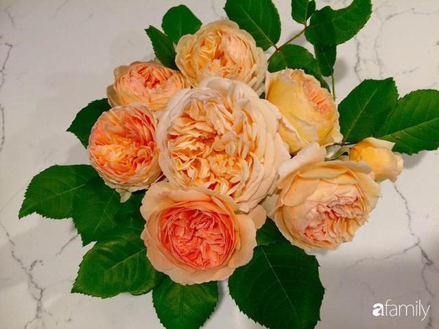 Mẹ Việt dồn hết tâm huyết để biến góc nhỏ trong vườn trở thành khu vườn hồng đẹp ngọt ngào - Ảnh 10.