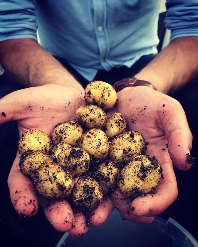 Anh chàng điển trai khiến hàng nghìn cô gái ngưỡng mộ khi trồng cả một sân thượng rau quả xanh tươi - Ảnh 17.