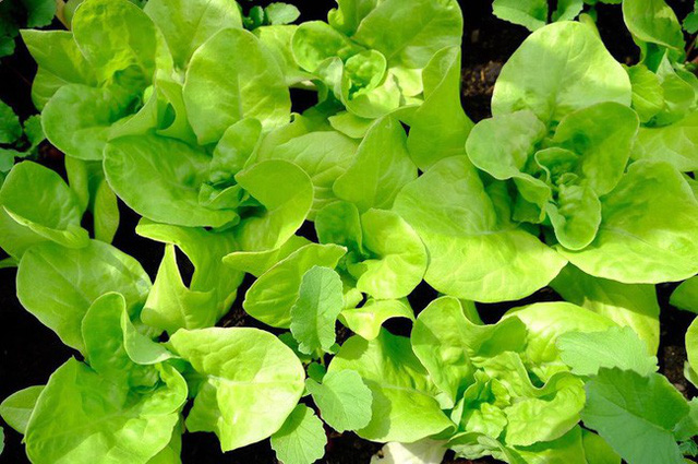 Anh chàng điển trai khiến hàng nghìn cô gái ngưỡng mộ khi trồng cả một sân thượng rau quả xanh tươi - Ảnh 23.