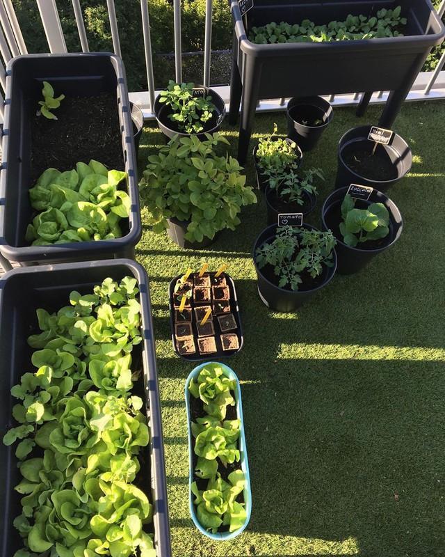 Anh chàng điển trai khiến hàng nghìn cô gái ngưỡng mộ khi trồng cả một sân thượng rau quả xanh tươi - Ảnh 24.