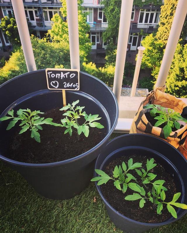Anh chàng điển trai khiến hàng nghìn cô gái ngưỡng mộ khi trồng cả một sân thượng rau quả xanh tươi - Ảnh 25.