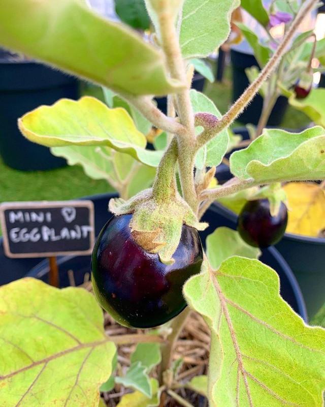Anh chàng điển trai khiến hàng nghìn cô gái ngưỡng mộ khi trồng cả một sân thượng rau quả xanh tươi - Ảnh 6.