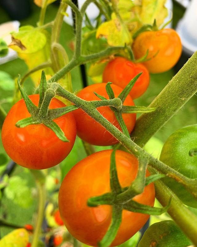 Anh chàng điển trai khiến hàng nghìn cô gái ngưỡng mộ khi trồng cả một sân thượng rau quả xanh tươi - Ảnh 7.