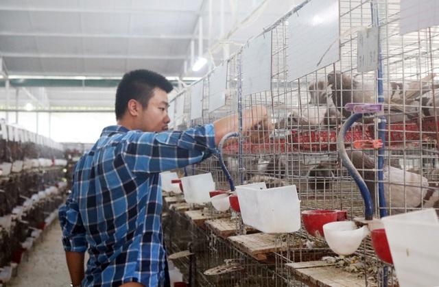 Du học ở Úc 4 năm, chàng trai về nước nuôi chim - Ảnh 1.