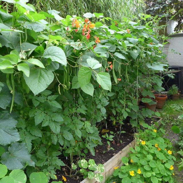 Tận dụng mảnh đất nhỏ sau nhà, người đàn ông đảm đang dù chân đi phải chống nạng vẫn trồng đủ loại rau quả sạch cho cả nhà thưởng thức - Ảnh 11.
