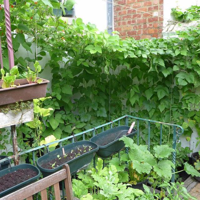 Tận dụng mảnh đất nhỏ sau nhà, người đàn ông đảm đang dù chân đi phải chống nạng vẫn trồng đủ loại rau quả sạch cho cả nhà thưởng thức - Ảnh 12.