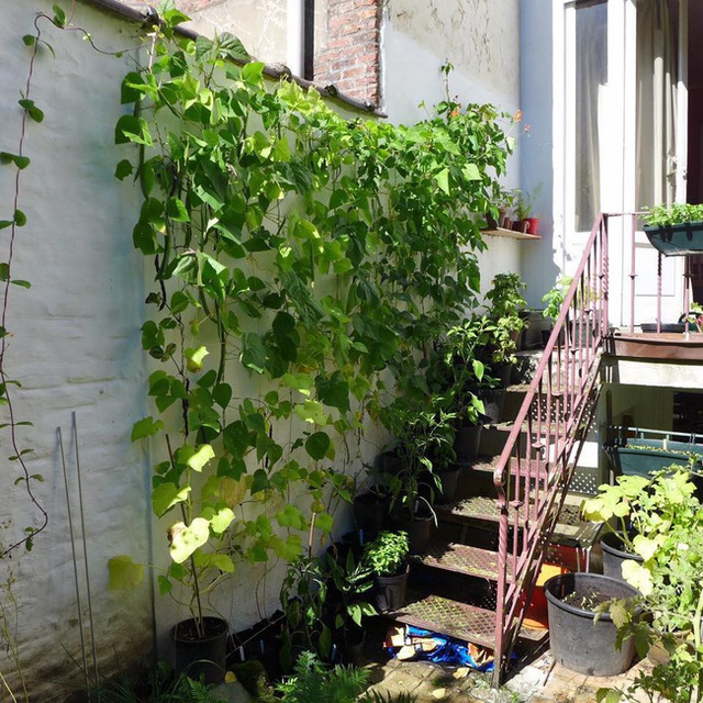 Tận dụng mảnh đất nhỏ sau nhà, người đàn ông đảm đang dù chân đi phải chống nạng vẫn trồng đủ loại rau quả sạch cho cả nhà thưởng thức - Ảnh 13.