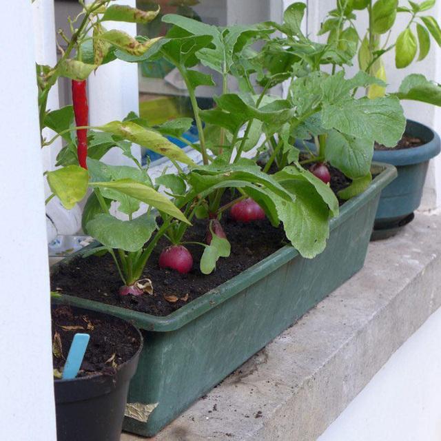 Tận dụng mảnh đất nhỏ sau nhà, người đàn ông đảm đang dù chân đi phải chống nạng vẫn trồng đủ loại rau quả sạch cho cả nhà thưởng thức - Ảnh 15.