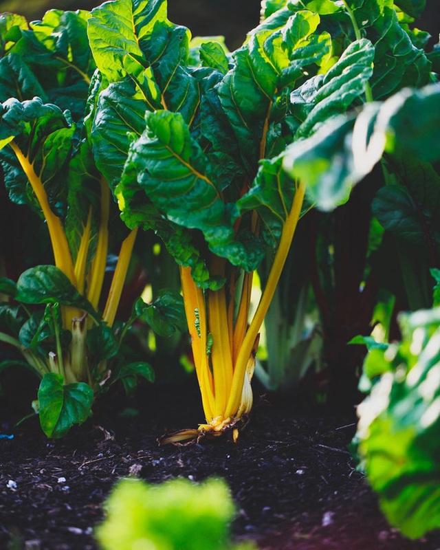 Người đàn ông tự trồng rau quả sạch trên khu vườn rộng 225m² của gia đình ở ngoại ô - Ảnh 11.