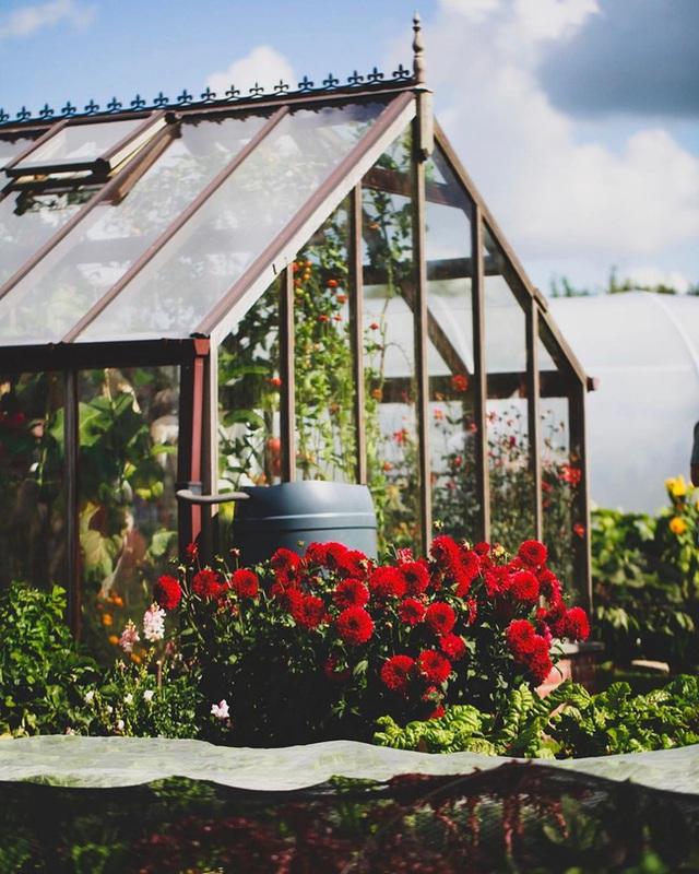 Người đàn ông tự trồng rau quả sạch trên khu vườn rộng 225m² của gia đình ở ngoại ô - Ảnh 12.
