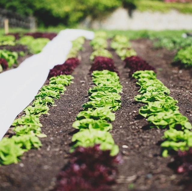 Người đàn ông tự trồng rau quả sạch trên khu vườn rộng 225m² của gia đình ở ngoại ô - Ảnh 14.