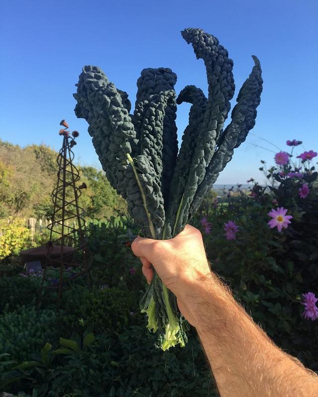 Người đàn ông tự trồng rau quả sạch trên khu vườn rộng 225m² của gia đình ở ngoại ô - Ảnh 16.