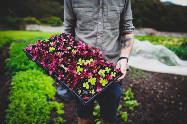 Người đàn ông tự trồng rau quả sạch trên khu vườn rộng 225m² của gia đình ở ngoại ô - Ảnh 3.