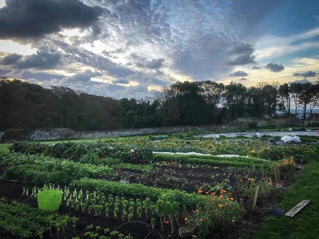 Người đàn ông tự trồng rau quả sạch trên khu vườn rộng 225m² của gia đình ở ngoại ô - Ảnh 4.