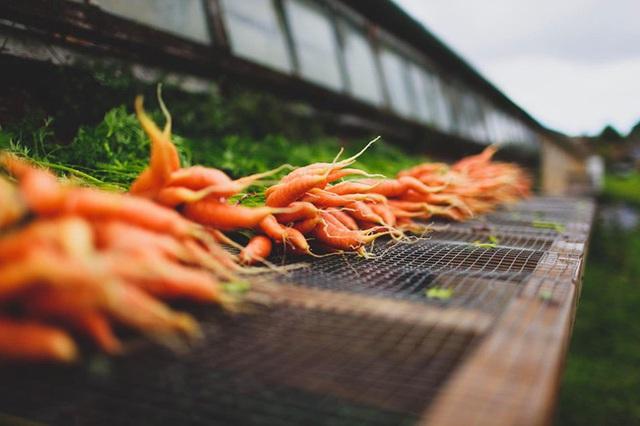 Người đàn ông tự trồng rau quả sạch trên khu vườn rộng 225m² của gia đình ở ngoại ô - Ảnh 5.