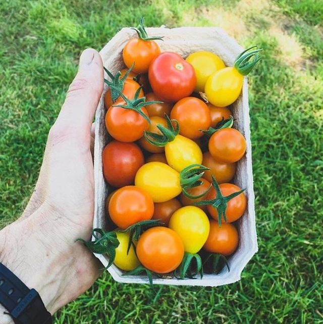 Người đàn ông tự trồng rau quả sạch trên khu vườn rộng 225m² của gia đình ở ngoại ô - Ảnh 6.