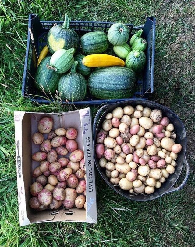 Người đàn ông tự trồng rau quả sạch trên khu vườn rộng 225m² của gia đình ở ngoại ô - Ảnh 9.