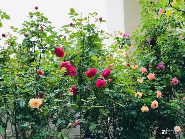 Ngày 20/11 ghé thăm vườn hồng trên sân thượng khoe sắc rực rỡ của cô giáo dạy nhạc xứ Thanh - Ảnh 12.