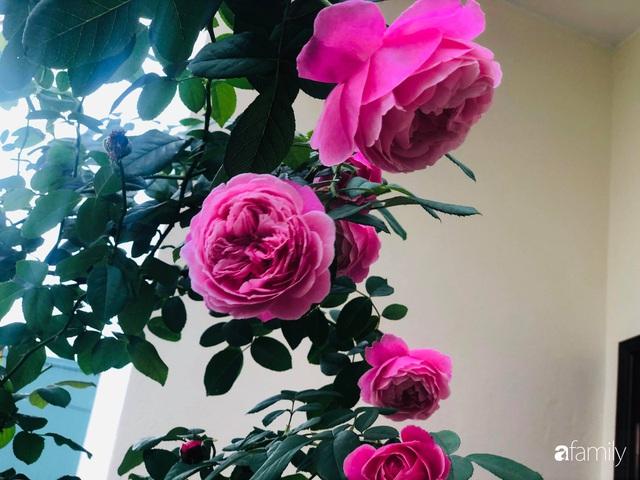 Ngày 20/11 ghé thăm vườn hồng trên sân thượng khoe sắc rực rỡ của cô giáo dạy nhạc xứ Thanh - Ảnh 13.