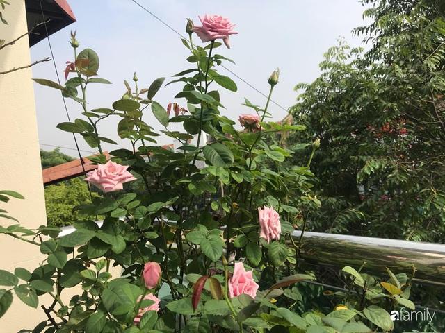 Ngày 20/11 ghé thăm vườn hồng trên sân thượng khoe sắc rực rỡ của cô giáo dạy nhạc xứ Thanh - Ảnh 19.