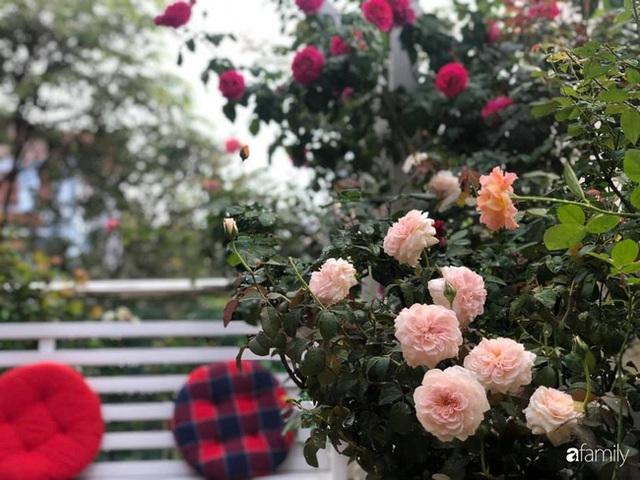Ngày 20/11 ghé thăm vườn hồng trên sân thượng khoe sắc rực rỡ của cô giáo dạy nhạc xứ Thanh - Ảnh 22.