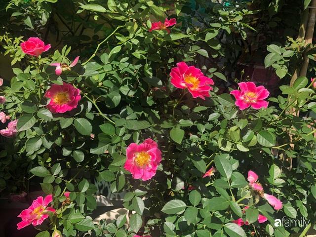 Ngày 20/11 ghé thăm vườn hồng trên sân thượng khoe sắc rực rỡ của cô giáo dạy nhạc xứ Thanh - Ảnh 24.