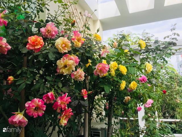 Ngày 20/11 ghé thăm vườn hồng trên sân thượng khoe sắc rực rỡ của cô giáo dạy nhạc xứ Thanh - Ảnh 4.