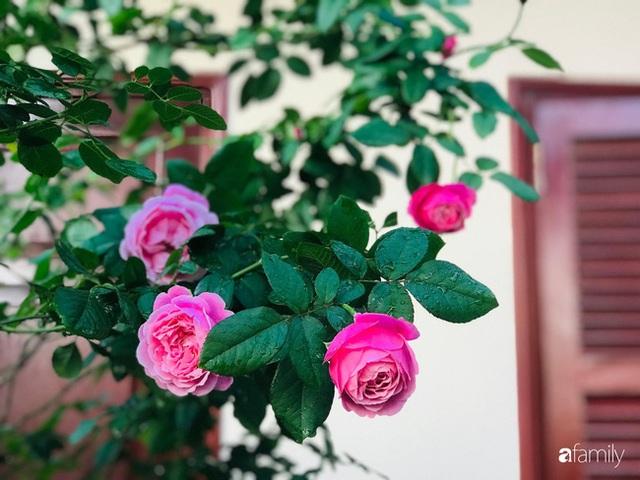 Ngày 20/11 ghé thăm vườn hồng trên sân thượng khoe sắc rực rỡ của cô giáo dạy nhạc xứ Thanh - Ảnh 32.