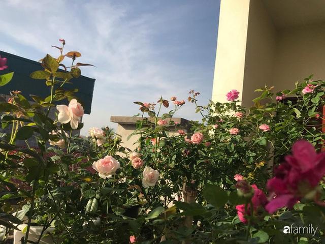 Ngày 20/11 ghé thăm vườn hồng trên sân thượng khoe sắc rực rỡ của cô giáo dạy nhạc xứ Thanh - Ảnh 33.