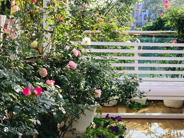 Ngày 20/11 ghé thăm vườn hồng trên sân thượng khoe sắc rực rỡ của cô giáo dạy nhạc xứ Thanh - Ảnh 35.