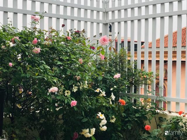 Ngày 20/11 ghé thăm vườn hồng trên sân thượng khoe sắc rực rỡ của cô giáo dạy nhạc xứ Thanh - Ảnh 36.