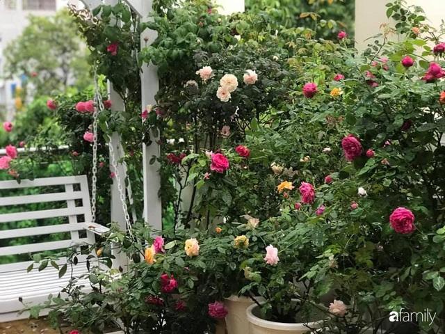 Ngày 20/11 ghé thăm vườn hồng trên sân thượng khoe sắc rực rỡ của cô giáo dạy nhạc xứ Thanh - Ảnh 38.