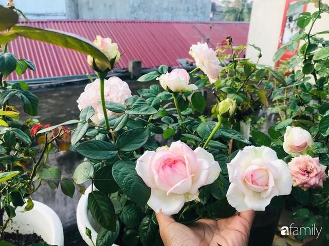 Ngày 20/11 ghé thăm vườn hồng trên sân thượng khoe sắc rực rỡ của cô giáo dạy nhạc xứ Thanh - Ảnh 5.