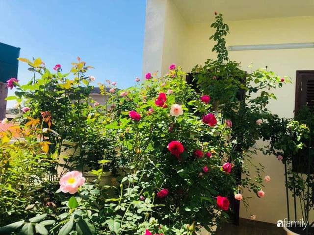 Ngày 20/11 ghé thăm vườn hồng trên sân thượng khoe sắc rực rỡ của cô giáo dạy nhạc xứ Thanh - Ảnh 10.