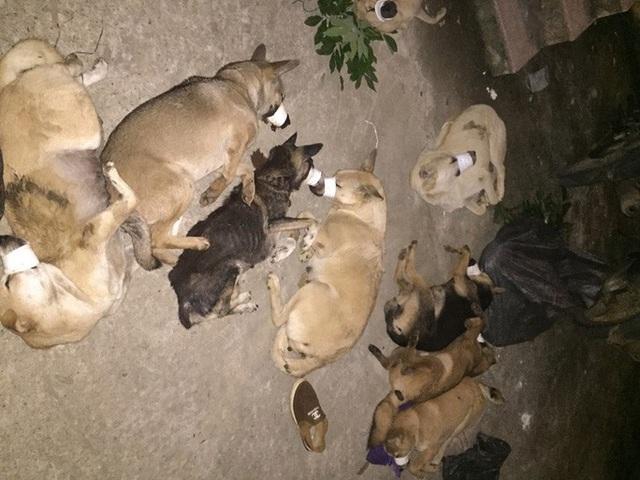 Thấy công an, 4 cẩu tặc ném lại 134 kg chó rồi trốn lên đồi  - Ảnh 2.