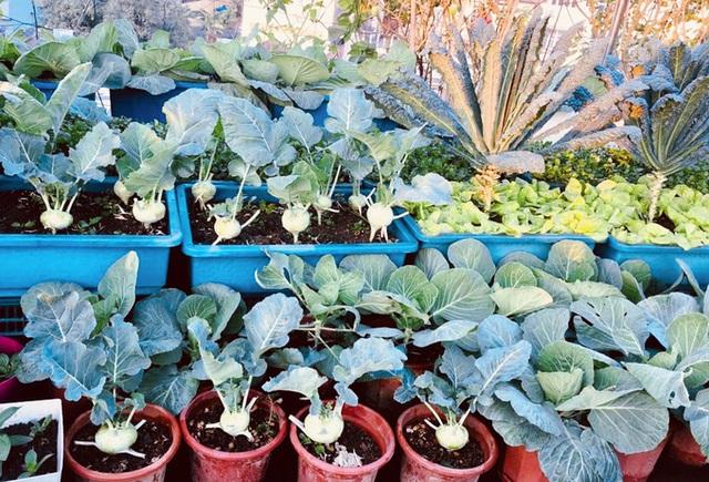 Vườn sân thượng 40 m2 tốt như trang trại  - Ảnh 3.