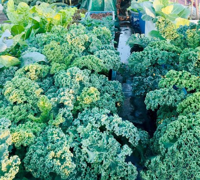 Vườn sân thượng 40 m2 tốt như trang trại  - Ảnh 7.