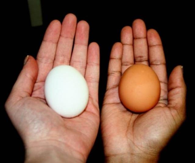 Giải thích cho chị em: Chính xác thì sự khác biệt giữa trứng gà nâu và trắng là gì mà giá cả lại có sự chênh lệch? - Ảnh 5.