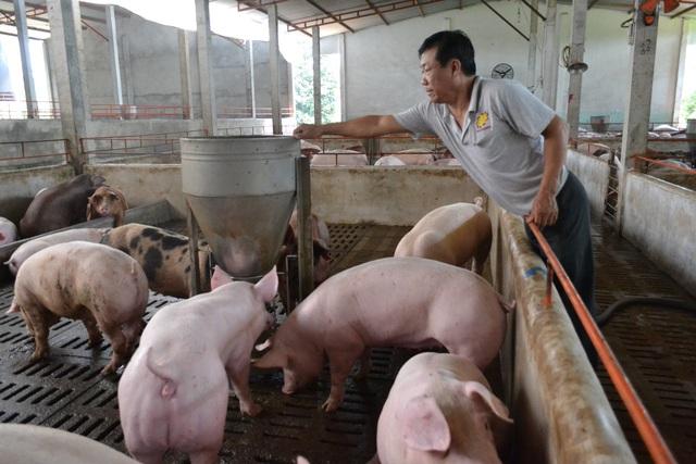 """Giá thịt lợn tăng là do người chăn nuôi """"găm"""" hàng? - Ảnh 2."""
