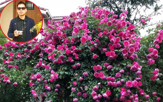 Khu vườn hoa hồng với đủ loại từ nội đến ngoại rộng 100m² ở Quảng Ninh - Ảnh 1.