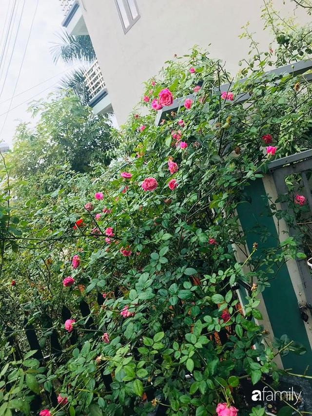 Khu vườn hoa hồng với đủ loại từ nội đến ngoại rộng 100m² ở Quảng Ninh - Ảnh 2.