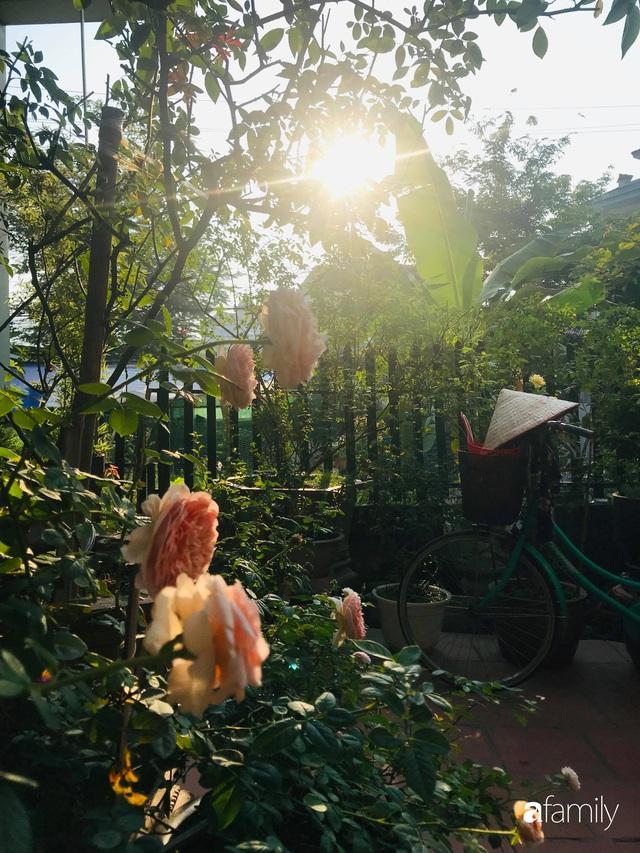 Khu vườn hoa hồng với đủ loại từ nội đến ngoại rộng 100m² ở Quảng Ninh - Ảnh 11.
