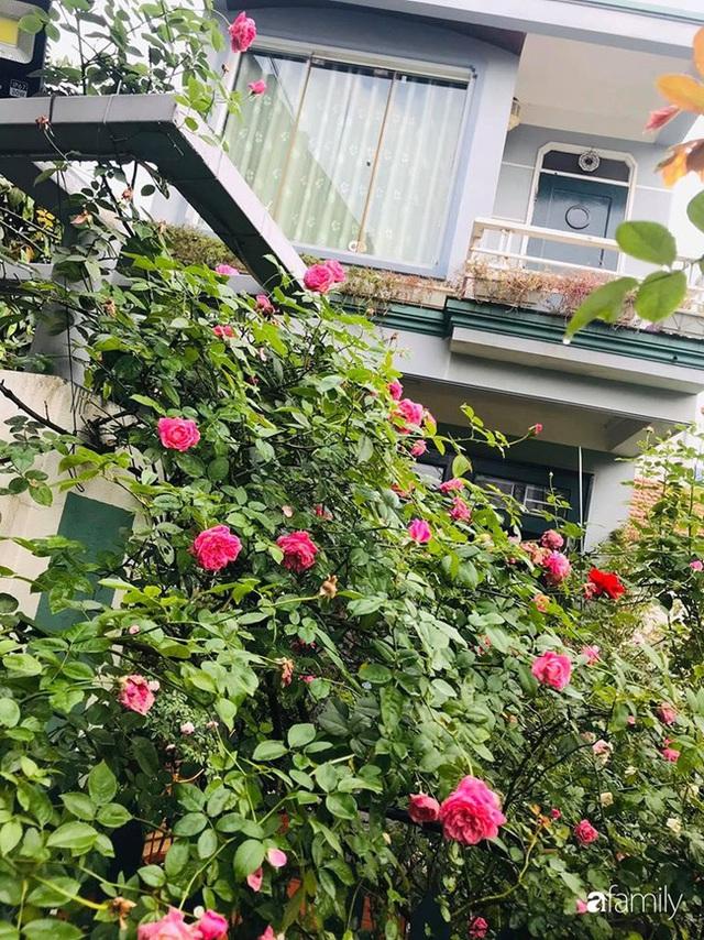 Khu vườn hoa hồng với đủ loại từ nội đến ngoại rộng 100m² ở Quảng Ninh - Ảnh 3.