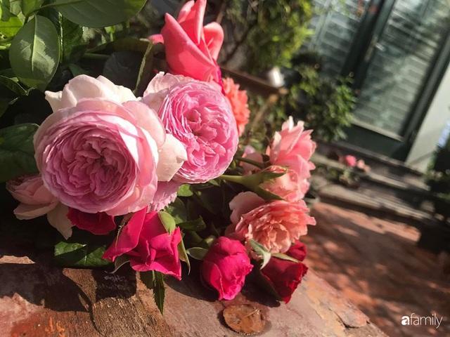 Khu vườn hoa hồng với đủ loại từ nội đến ngoại rộng 100m² ở Quảng Ninh - Ảnh 21.