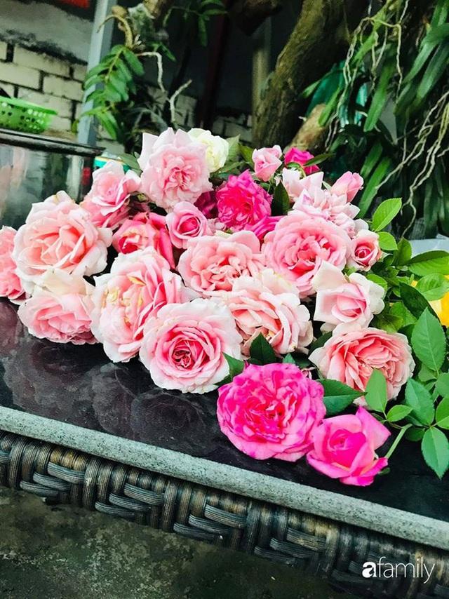 Khu vườn hoa hồng với đủ loại từ nội đến ngoại rộng 100m² ở Quảng Ninh - Ảnh 23.